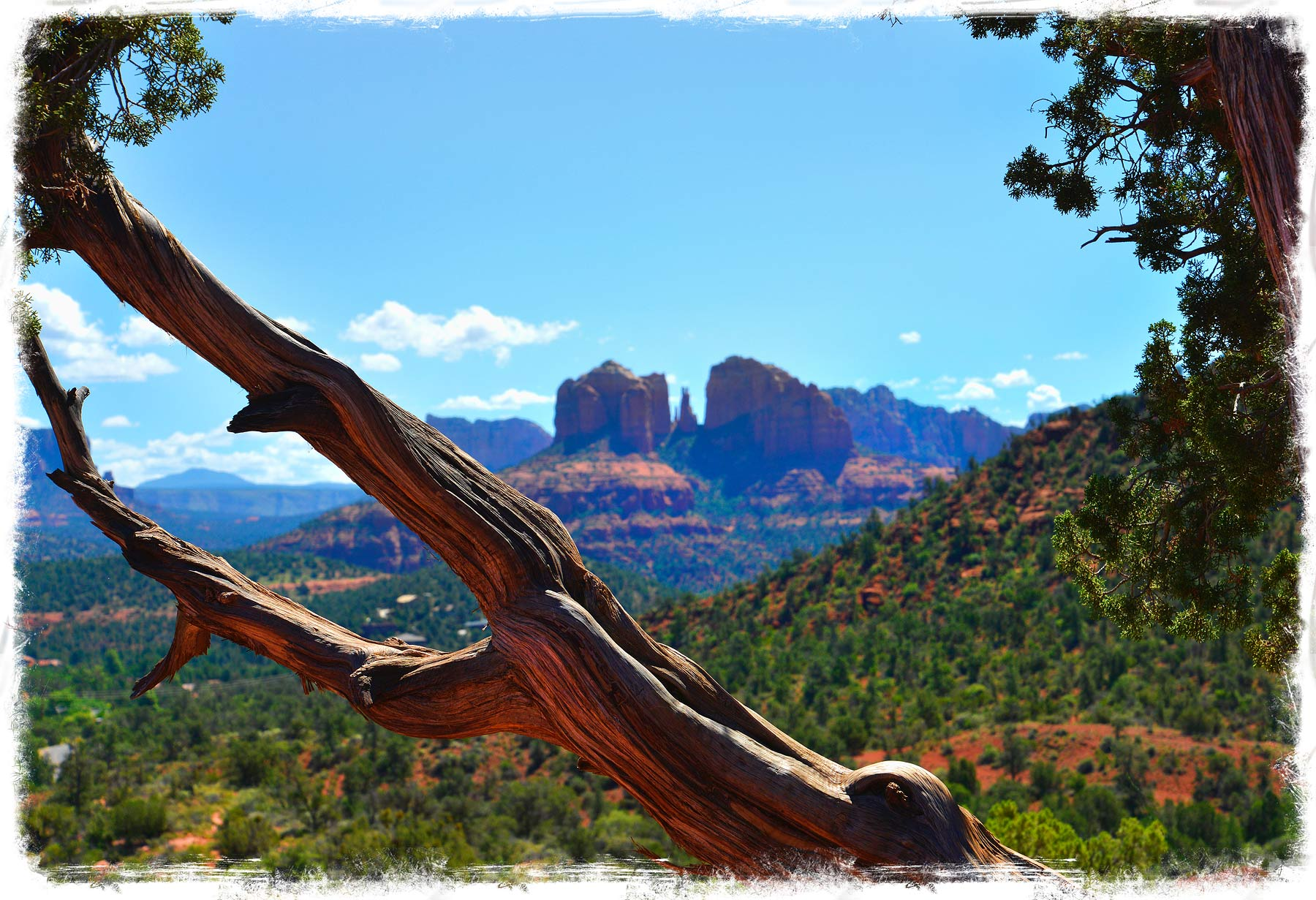 cypress tree in Sedona