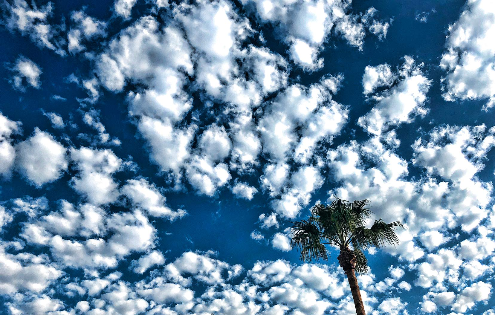 palm tree and clouds,Phoenix